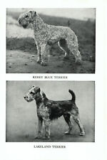 1947 Complete Dog Book - Kerry Blue Terrier and Lakeland Terrier on one side .