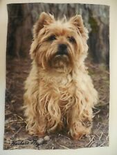Cairn Terrier Dog Pure Breed, Scottish dog, Every day use decorative Garden flag