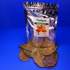 50pcs 10~18cm aquarium Catappa Leaves Indian Almond Leaf  shrimp fish tank