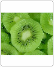 Kiwi Fruit (Actinidia Chinensis) Vine Great Heirloom 10 Seeds