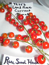 Tess's Land Race Currant Tomato Seeds! Comb. S/H See our Store for Rare Seeds!