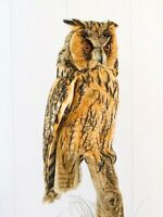 Vintage Real Genuine Stuffed Bird Owl Taxidermy Standing Mount 21.5 in""