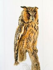 "Vintage Real Genuine Stuffed Bird Owl Taxidermy Standing Mount 21.5 in"""