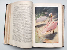 1902 Imperial Russian ANIMALS of AMERICA ASIA AUSTRALIA Book Illustrated