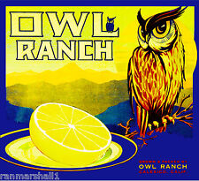 Calexico California Owl Ranch Grapefruit Citrus Fruit Crate Label Art Print