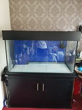 4ft x 2ft x 2ft Marine fish tank and sump setup clearseal