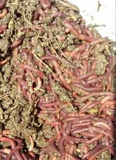 2 lb Mx  compost worms  European n Red wigglers crawler