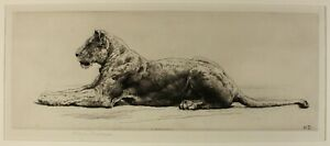 1914 rare beautiful etching Herbert Dicksee   recumbent LIONESS signed in pencil