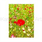 ACEO ATC Art Card Watercolor Print Signed Spring Poppies Wildflower Garden