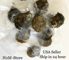Five Individually Wrapped Akoya Oysters with SMALL 6-7mm Pearls GREAT GIFT IDEA