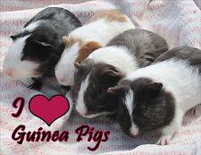 Guinea Pig Fridge Magnet - Wildlife