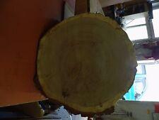 5 Baumscheiben, Holzscheibe, 30 x 2-3 cm, Eiche, ohne Rinde