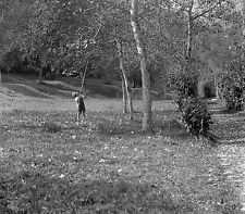 1910s BOY SHAKING TREE Antique Photographic Glass Negative (Fruit Picking)