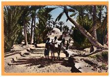 EL HAMMA (TUNISIE) Ane monté à la PALMERAIE vers 1950