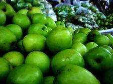 NEW Seeds OF 10 JUJUBE CHINESE DATE ZIZIPHUS JUJUBE TREE SEED NATIVE THAI FRUIT