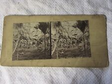 c1880s INDIAN SCENERY A Coconut Grove - India Stereoview Photo Card