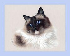 RAGDOLL CAT sceau point beauté imprimer par Irina garmashova