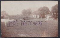 Staffordshire Postcard - Cows at Glutton Longnor   T2301