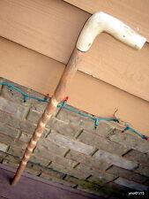 SPIRAL SASSAFRAS CANE/walking stick smooth Loblolly Pine-Branch handle~gift
