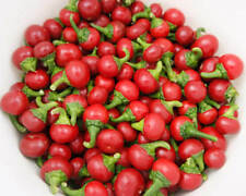 HOT CHILLI PEPPER - RED CHERRY (70 SEEDS)