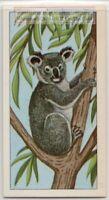 Koala Bear Australia Marsupial Mammal Eucalyptus Vintage Trade Ad Card