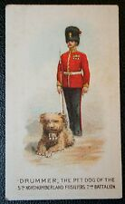 Northumberland Fusiliers  Regimental Mascot  Original 1911 Vintage Card