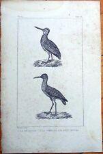 La Becassine, Le Chevalier Aux Pieds Rouges - 1830s French Bird Print
