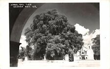 OAXACA OAX MEXICO ARBOL DEL TULE~REAL PHOTO POSTCARD 1950s