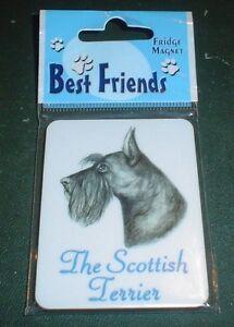 Lovely Scottish Terrier Fridge Magnet
