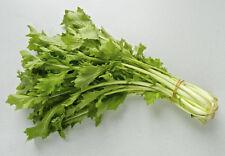 Micro vert bébé Leaf namenia New Vitamine RICHE HIVER salade 500+ fresh seeds
