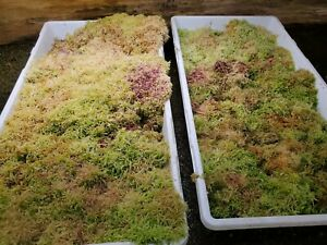 Live Sphagnum Moss Multi Colored 1 Quart Sized Bag - Growers choice