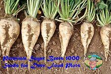 Premium Sugar Beets 1000 Seeds Deer Food Plots Excellent By Old Cobblers Farm
