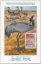 52209 - FINLAND -  MAXIMUM CARD - 1959  ANIMALS:  BIRD