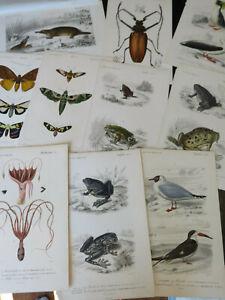 Natural History- Dict,Universal D Histoire Naturelle, Paris ca: 1849 10 plates
