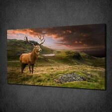 RED DEER STAG SUNSET ANIMAL MODERN CANVAS WALL ART PRINT PICTURE READY TO HANG