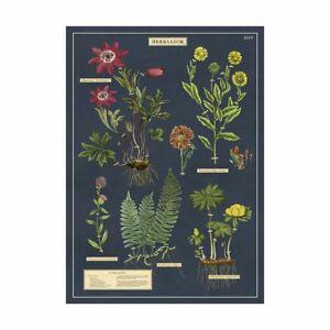 Cavallini Herbarium Vintage Poster   Wall Art Print Craft Decoration