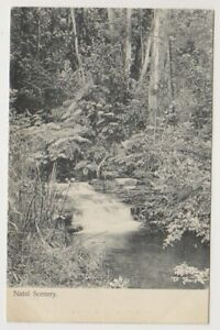 South Africa postcard - Natal Scenery (A63)