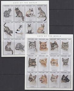 Sierra Leone Sc 1892-1895 MNH. 1996 Cats, 2 sheets of 12 + 2 Souv Sheets