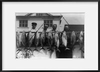 Vintage Photograph of Tuna fishing grows more popular at Avalon, N.J. Average we