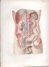 Antique Print-HUMAN ANATOMY Abdomen deep plane ANGER 1869