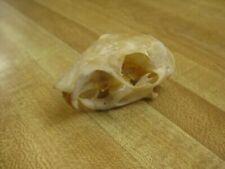 Huesos / cráneo / esqueleto