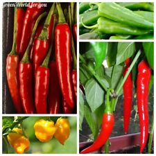 80 Chili Pepper Vegetable Seeds Capsicum Spices Rare 12 Kinds Spicy Spice Plants