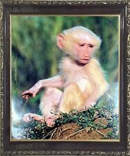 Albino Olive Baboon Baby Monkey Wildlife Animal Wall Decor Art Framed Picture