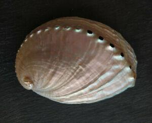 Coquille d'ormeau polie / Abalone / Oreille de mer / Nacre