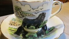 New listing Taylor & Kent Newfoundland Dog Tea Cup Saucer Bone China England
