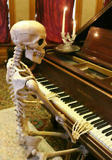 170cm Poseable Scary Full Life Size Human Skeleton Halloween Decoration Prop NEW
