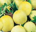 LEMON CUCUMBER SEEDS 30+ Vegetable GARDEN culinary SALAD pickling FREE SHIPPING