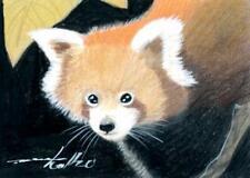 ACEO original pastel drawing  firefox little panda wildlife by Anna Hoff