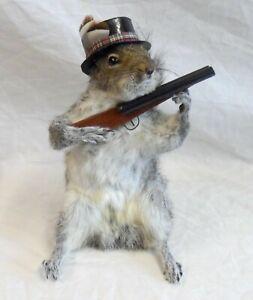 Taxidermy: Wild European grey squirrel in a top hat (sciurus carolinensis)