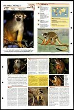Squirrel Monkey #249 Mammals Wildlife Fact File Fold-Out Card